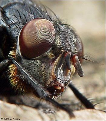 ماکروگرافی حشرات – قسمت اول
