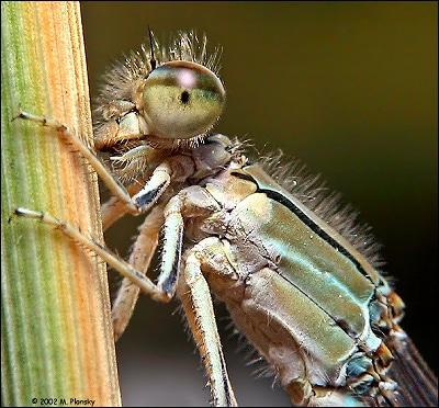 ماکروگرافی حشرات – قسمت دوم