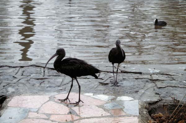 پارسا صفا بخش راستگو – ۱۰ساله – پارک پرندگان اصفهان – عکس ۲