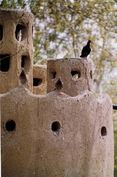 حامد اسدی،۸ساله، لانه پرنده، مشهد