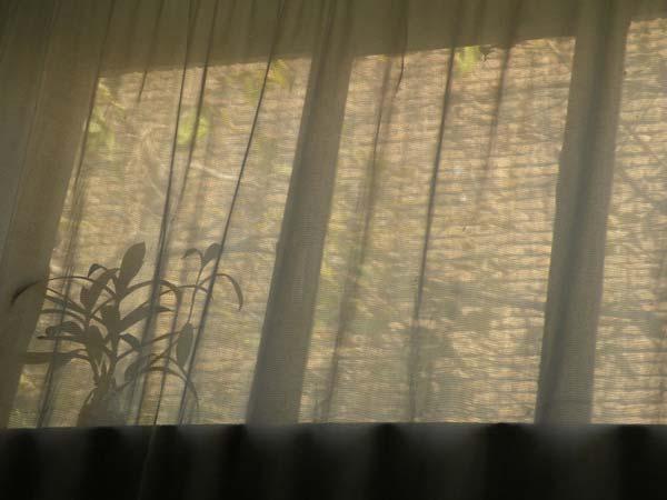 فرانک فریدونی  – عکس ۳