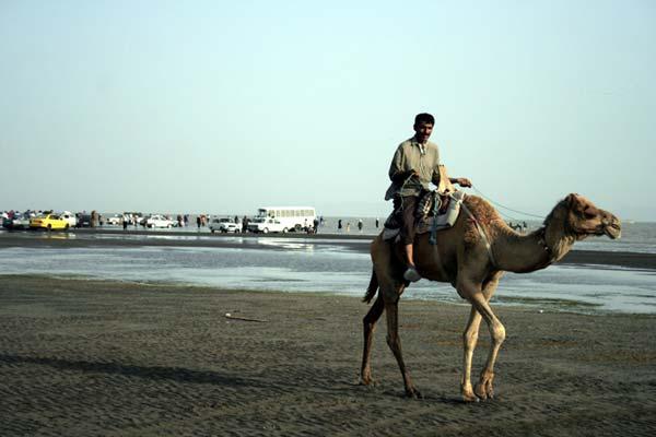 امیرحسین حیدری – شتر سواری در سواحل خلیج فارس – عکس ۴