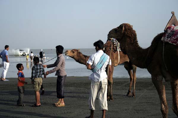 امیرحسین حیدری – شتر سواری در سواحل خلیج فارس – عکس ۵