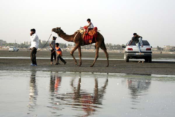 امیرحسین حیدری – شتر سواری در سواحل خلیج فارس – عکس ۶
