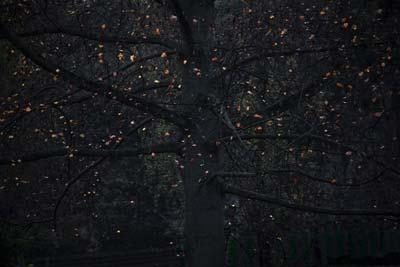 نمایشگاه عکس «سرزمین پریان» مهرداد نراقی در گالری راه ابریشم