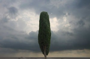 عکس: مهدی مقیم نژاد، پروژه واقع نماییها، فصل سوم: مرز رویش سروها،۱۳۹۱