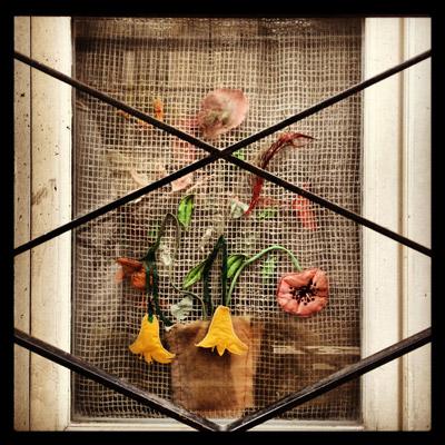 نمایشگاه عکس گلناز طاهری در گالری راه ابریشم