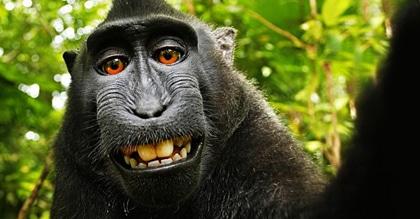 جنجال کپیرایت بر سر سلفی یک میمون سیاه خندان