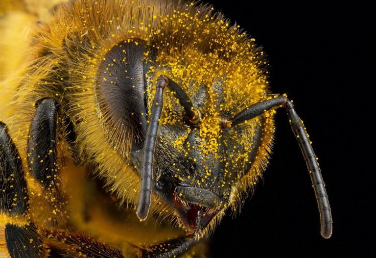 وقتی تاراج آنلاین، عکاس حشرات را زیر پا له کرد – قسمت اول