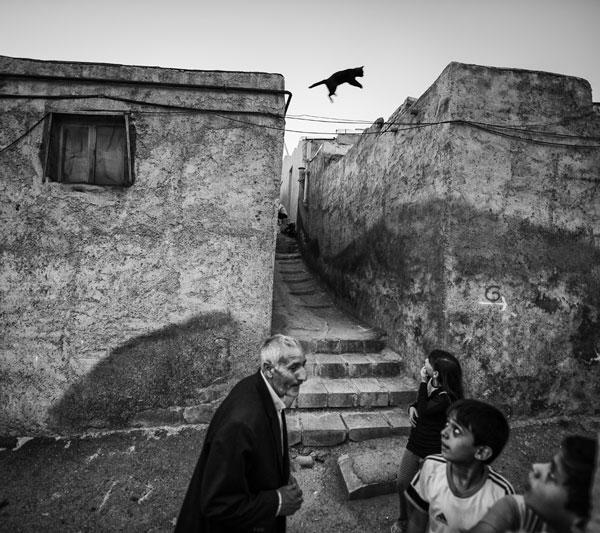 مجید شقاقی فلاح – عکس ۱