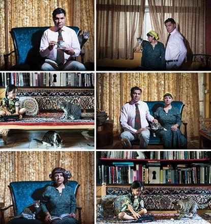 نمایشگاه عکس و چیدمان «گربه ایرانی» در گالری اعتماد