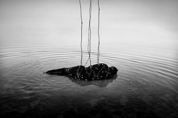عکس: صمد قربانزاده