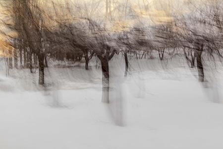 نمایشگاه عکس امیرحسین حشمتی در گالری «شیرین دو»