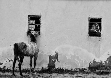 نمایشگاه عکس«اسب حیوانی است نجیب» در ارومیه