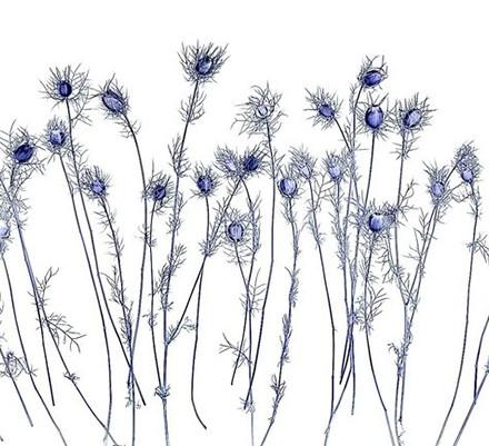 «روشنی، من، گل، درخت»؛ بازیابی نوستالژی گلهای کودکی