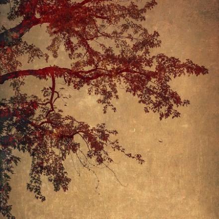 نمایش جدیدترین آثار عکاس و هنرمند معاصر وندی اشنایدر