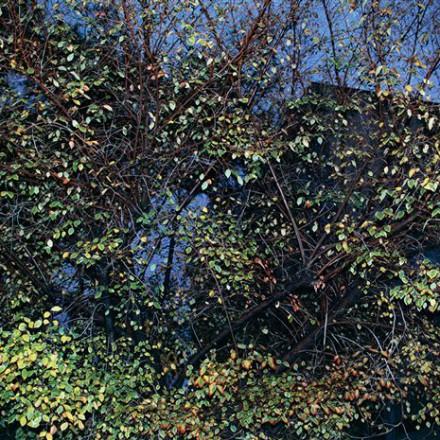 نمایشگاه عکس گلآرا جهانیان در گالری اُ