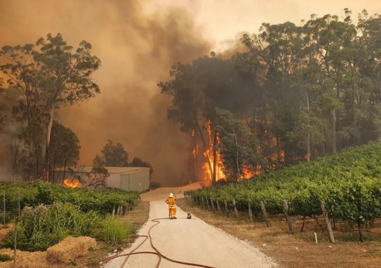 نگاهی به عکسهای برگزیده سال ۲۰۱۹: حوادث، بلایای طبیعی و بحران اقلیمی