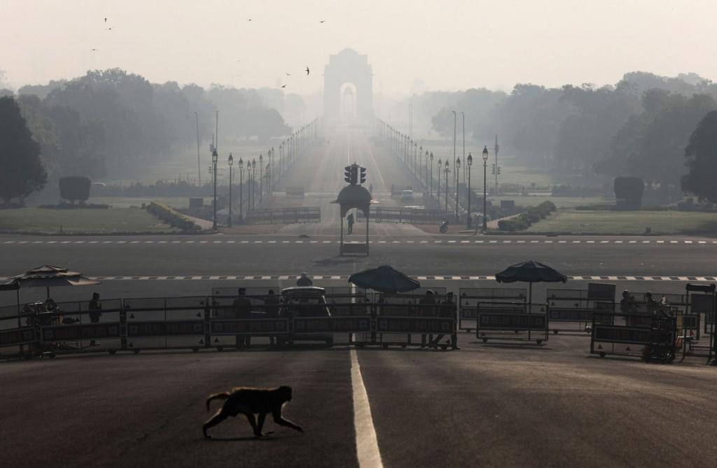 Anushree Fadnavis از رویترز. میمونی در حال عبور از جادهای در نزدیکی کاخ ریاست جمهوری هند، طی اجرای منع رفتوآمد 14 ساعته در دهلینو. 22 مارس 2020