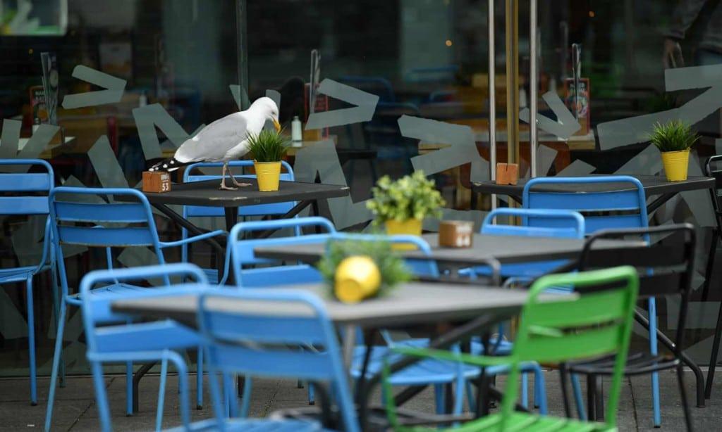 Dan Mullan از گتی. مرغ دریایی درون رستورانی خالی در اکستر انگلستان دنبال غذا میگردد.