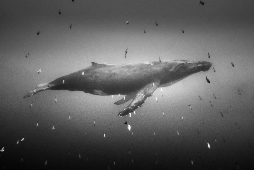 Christian Vizl. از کتاب «قلمرو خاموش: جهان زیر امواج»، رتبه اول دسته کتاب-طبیعت (حرفهای) مسابقه عکاسی توکیو 2019