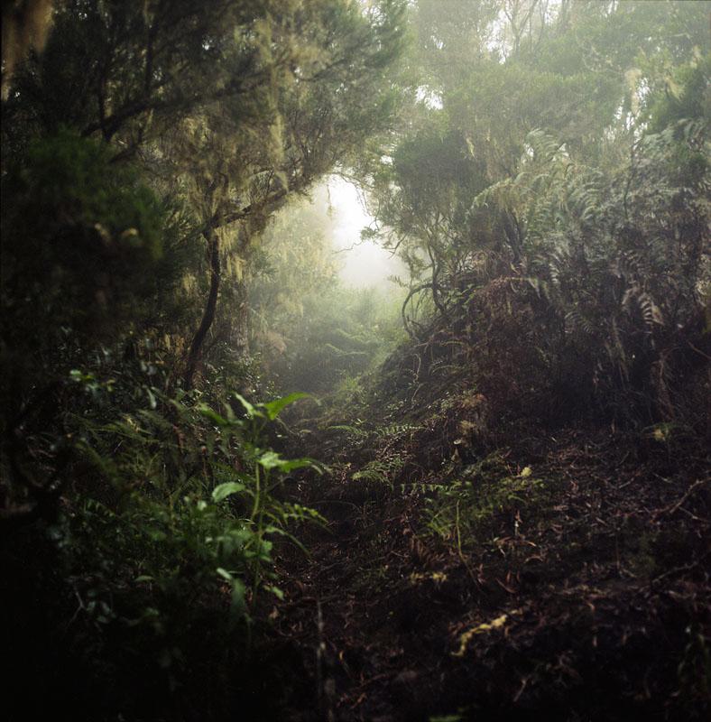 Coquentin Julien. از مجموعهی Tropics. برنده بخش «سفر» مسابقه عکاسی IPG 2019