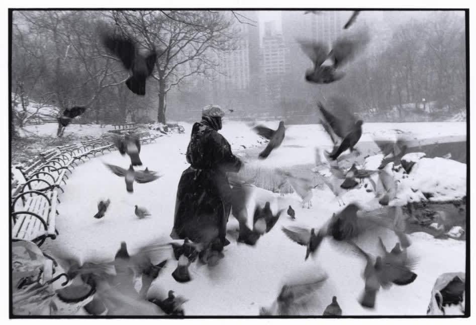 بروس دیویدسن. لولا در سنترال پارک با پرندهها، نیویورکسیتی، 1992