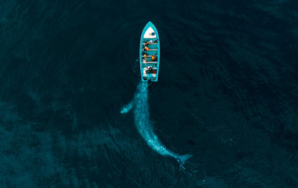 Jose Ruiz Cheires. وال خاکستری با قایق بازی میکند، از فینالیستهای مسابقه عکاسی سفر لنزکالچر 2020