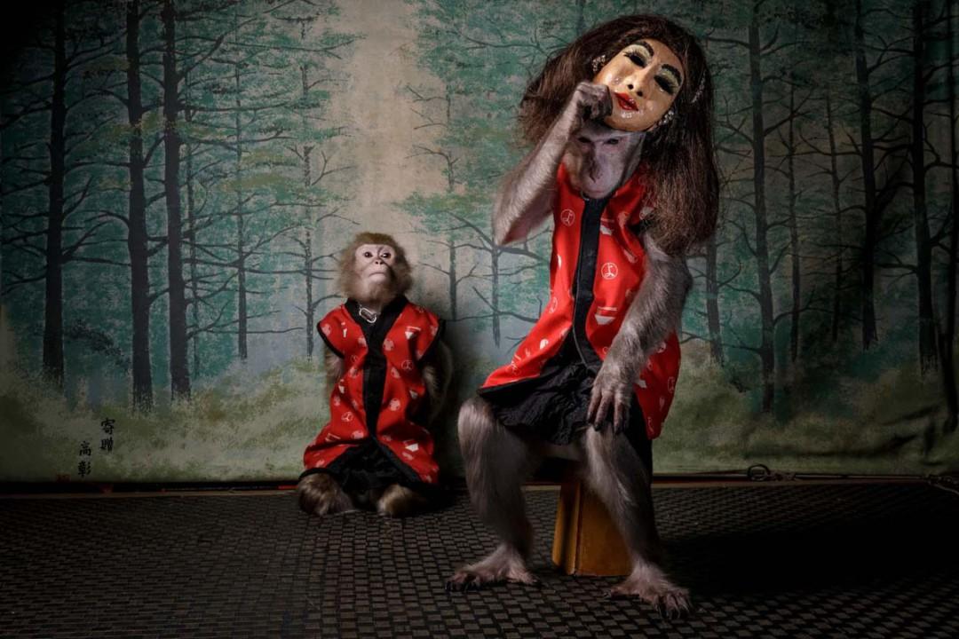 معرفی برندگان مسابقه عکاسی عکاس سال حیات وحش اروپا ۲۰۲۰