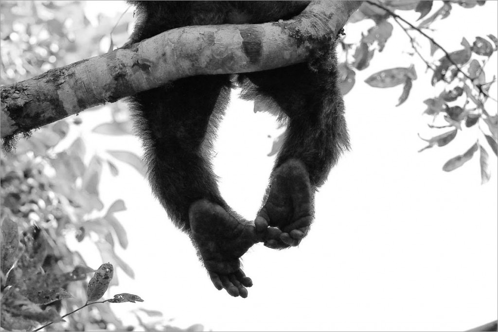 Wolfgang Veeser. خارش. رتبه دوم بخش «پستانداران» مسابقه عکاسی عکاس سال حیات وحش اروپا 2020
