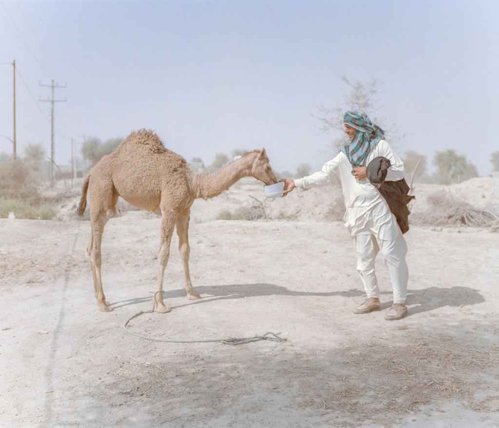 هاشم شاکری. از مجموعهی Elegy for the Death of Hamun غلام، 45 ساله، دو شتر در شهرستان دشتیاری چابهار دارد. خشکسالی تأثیری سوء بر احشام داشته.