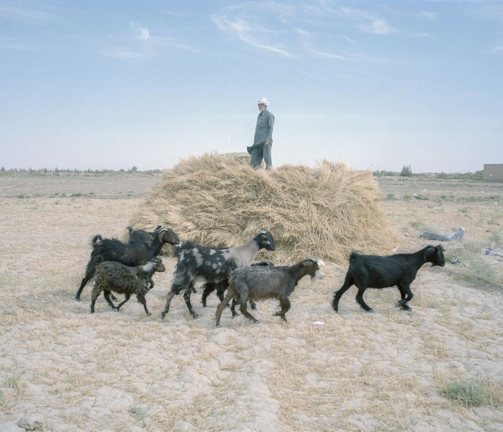 هاشم شاکری. از مجموعهی Elegy for the Death of Hamun نبی سارانی، 63 ساله. او بسیاری از گوسفندهایش را در اثر خشکسالی از دست داده. تنها همین چند تا برایش باقی ماندهاند. به هر حال، او امیدوار است که با حفر یک چاه جدید بتواند به کار کردن در اینجا ادامه دهد.