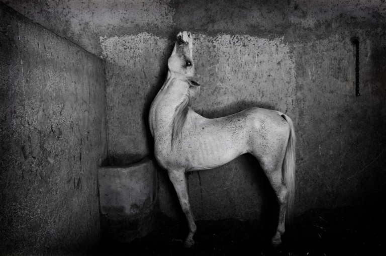 معرفی برندگان مسابقه عکاسی سیاه و سفید لنزکالچر ۲۰۲۰