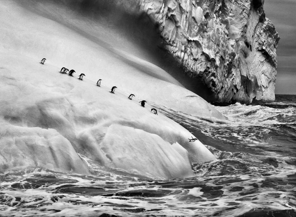 سباستیائو سالگادو. پنگوئنهای روی کوه یخ، جزایر South Sandwich، حوالی قطب جنوب، 2009