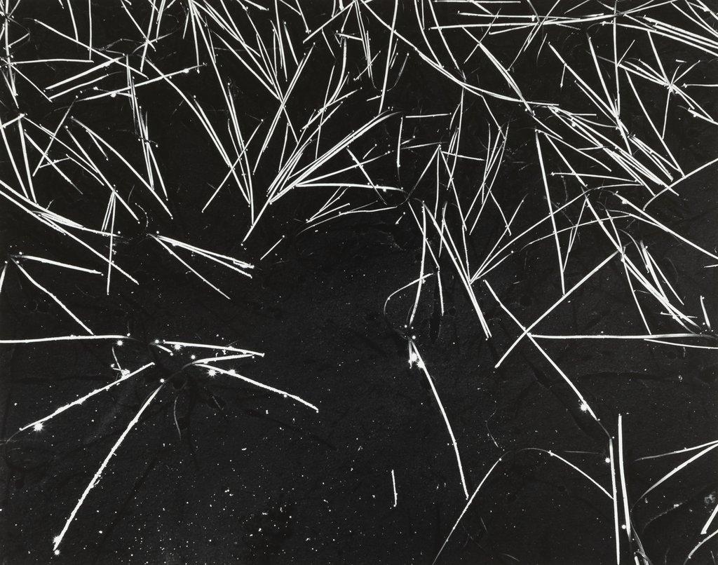 انسل آدامز. گیاه و آبگیر، 1935