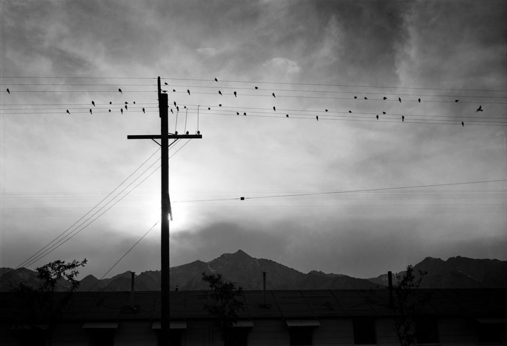 انسل آدامز. پرندگان روی سیم، کمپ مَنزِنار، 1943