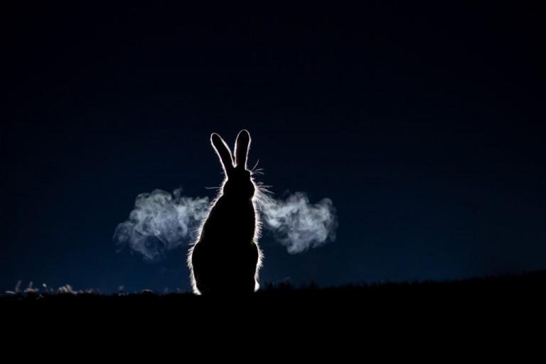 فراخوان مسابقه بینالمللی عکاسی حیات وحش ۲۰۲۱