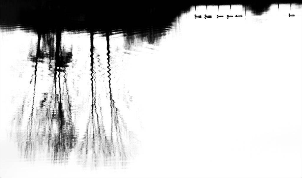 Diego GIRVES. از برگزیدگان دسته «گرافیک، فرم و متریال طبیعت» مسابقه عکاسی حیات وحش 2020