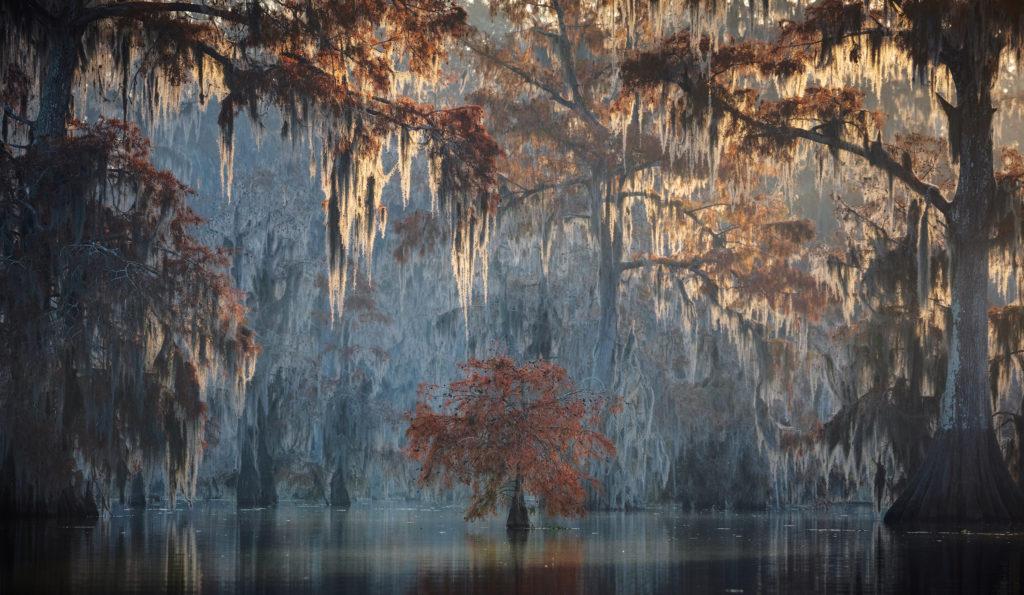 Andrea POZZI. از برگزیدگان دسته «گیاهان وحشی» مسابقه عکاسی حیات وحش 2020