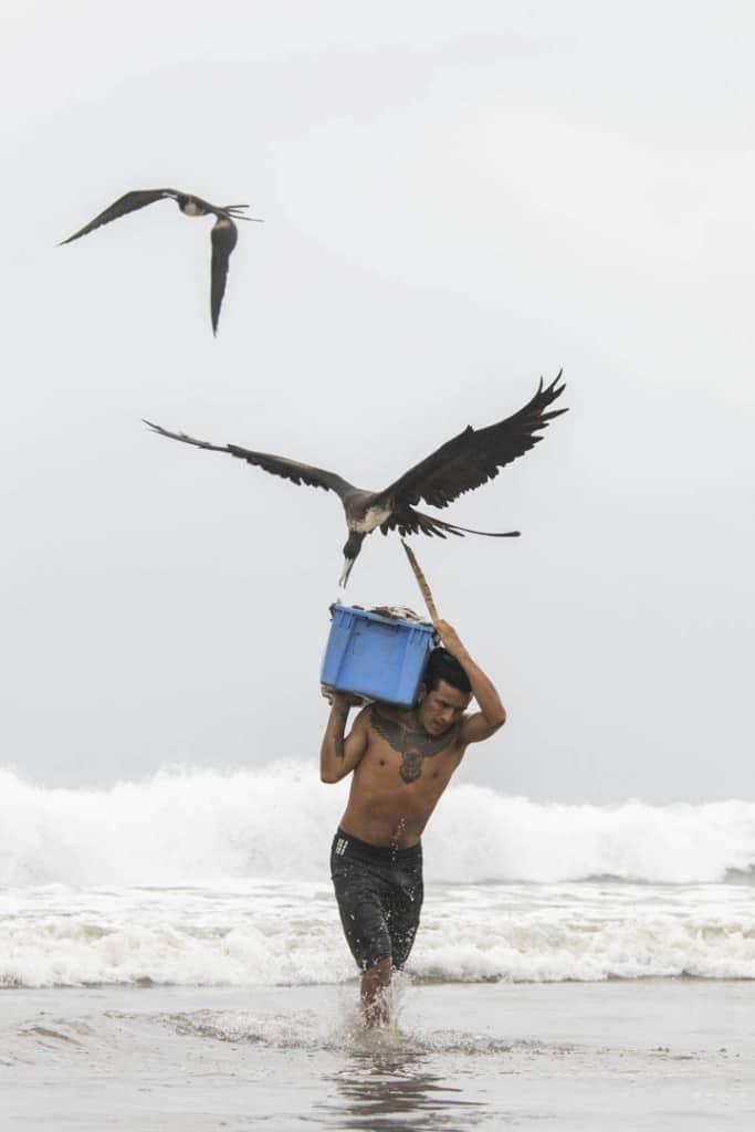 Jef Pattyn. «دزدیدن ماهی»، از عکسهای منتخب مسابقه عکاس محیط زیست سال 2019