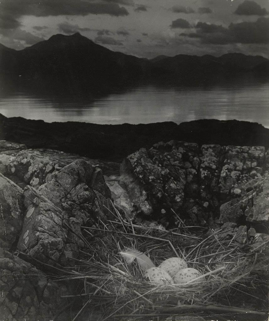 بیل برانت. «آشیانه مرغ دریایی، شب وسط تابستان، جزیره اسکای»، 1947