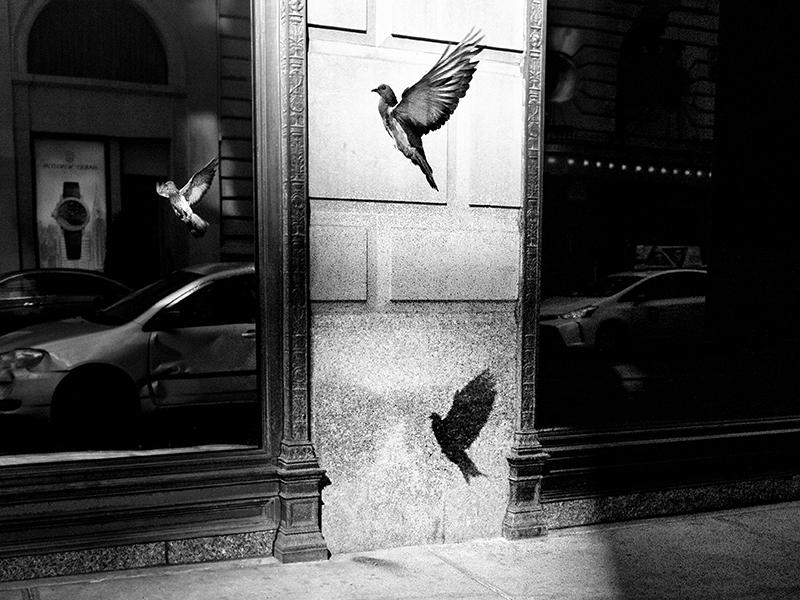 الن شالر. Pigeon Served Three Ways نظم و تکنیک در کار الن شالر عناصری کلیدی هستند اما غریزه نیز نقش دارد. این عکس «بعد از 10 دقیقه انتظار اتفاق افتاد. هدف من انعکاس پرنده در پنجره بود... آن سایه یک شگفتی بود.»