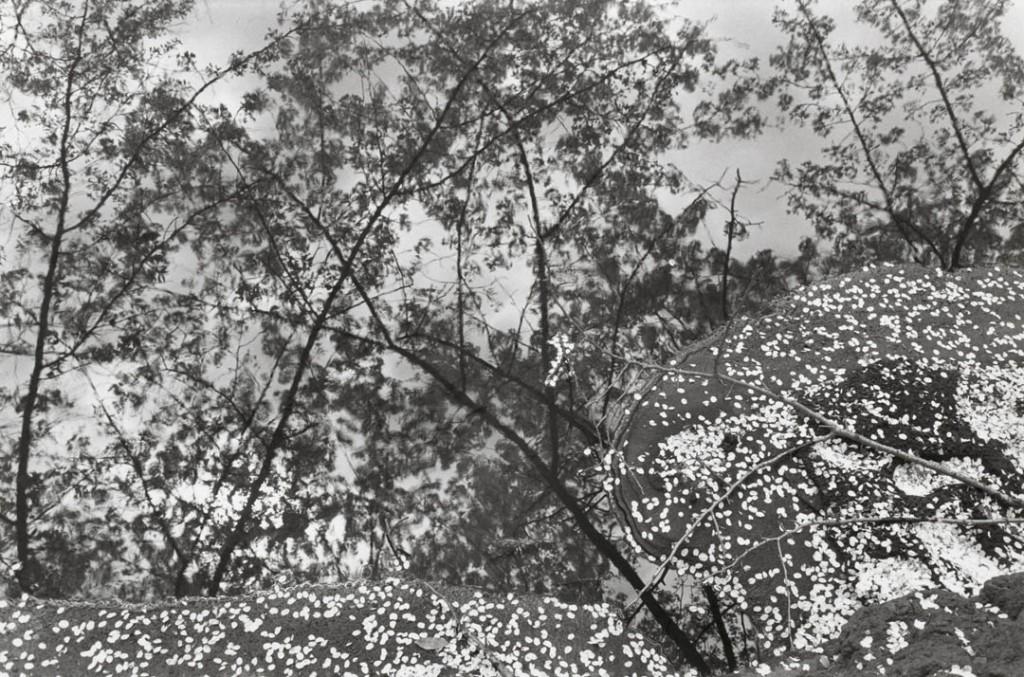 لی فریدلندر. «توکیو، ژاپن»، 1979