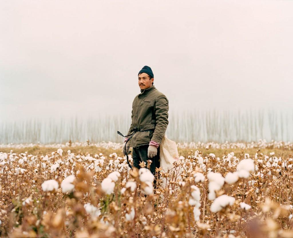 پاتریک وک. کارگر فصلی از اقلیت اویغور در آخرین روزهای برداشت پنبه در بۈگۈر ناھىیىسى، استان سینکیانگ، چین، نوامبر 2016 پنبه از بزرگترین صنایع کشاورزی این استان است و بسیاری از محلیهای اویغور بهعنوان کارگر ارزان فصلی طی فصل برداشت استخدام میشوند.