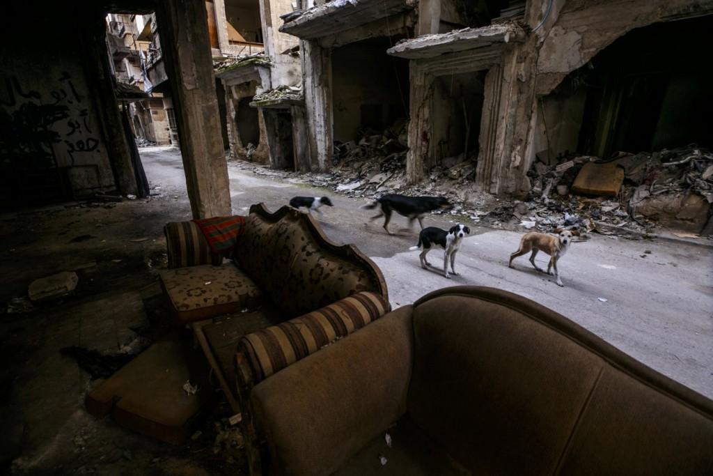 Omar Sanadiki برای UNOCHA. «سگهای ولگرد در میان آوار، دمشق»، دسامبر 2020