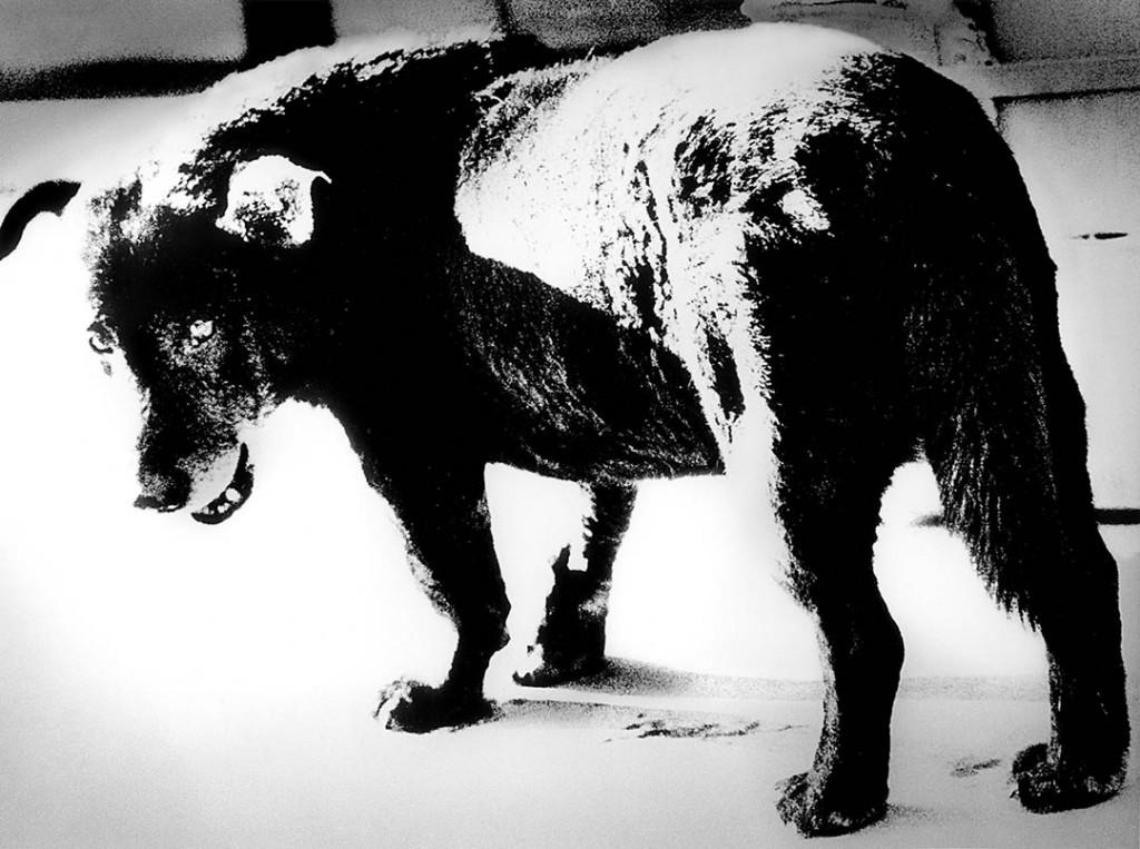 دایدو موریاما. «سگ ولگرد، میساوا»، 1971