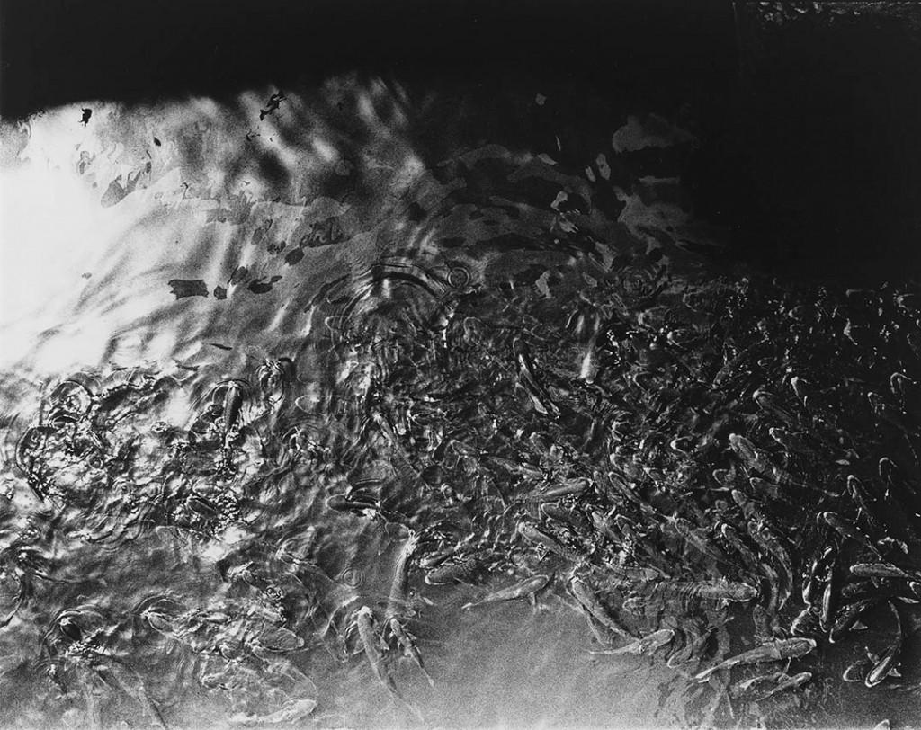 دایدو موریاما. «هیستریک 4»، 1993
